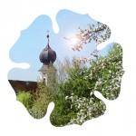 121016_450-Jahre-Reformation-Ortenburg_Luterrose