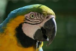 Tourismus_vogelpark